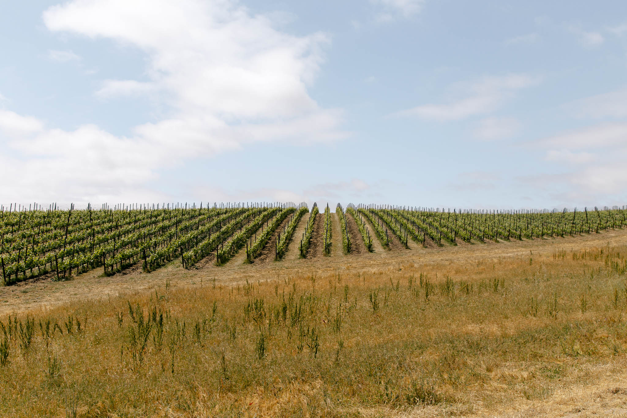 Central Coast California Vineyard Photography at Levo Wine Vineyard Site