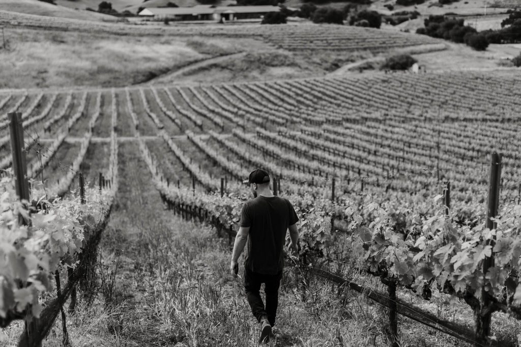 Levo Wine Vineyard Day Photography by Amarie Design Co.